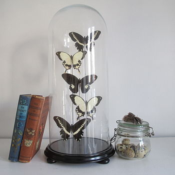 normal_glass-dome-with-butterflies