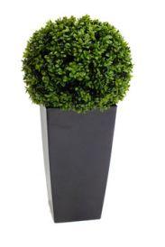 Buxus Topiary Ball