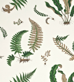 GPJBaker-LarkhillWallpapers-Ferns-BW45044-1-01